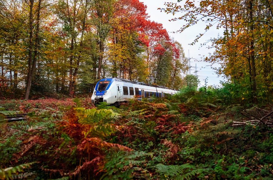 NX im Wald bei Leverkusen
